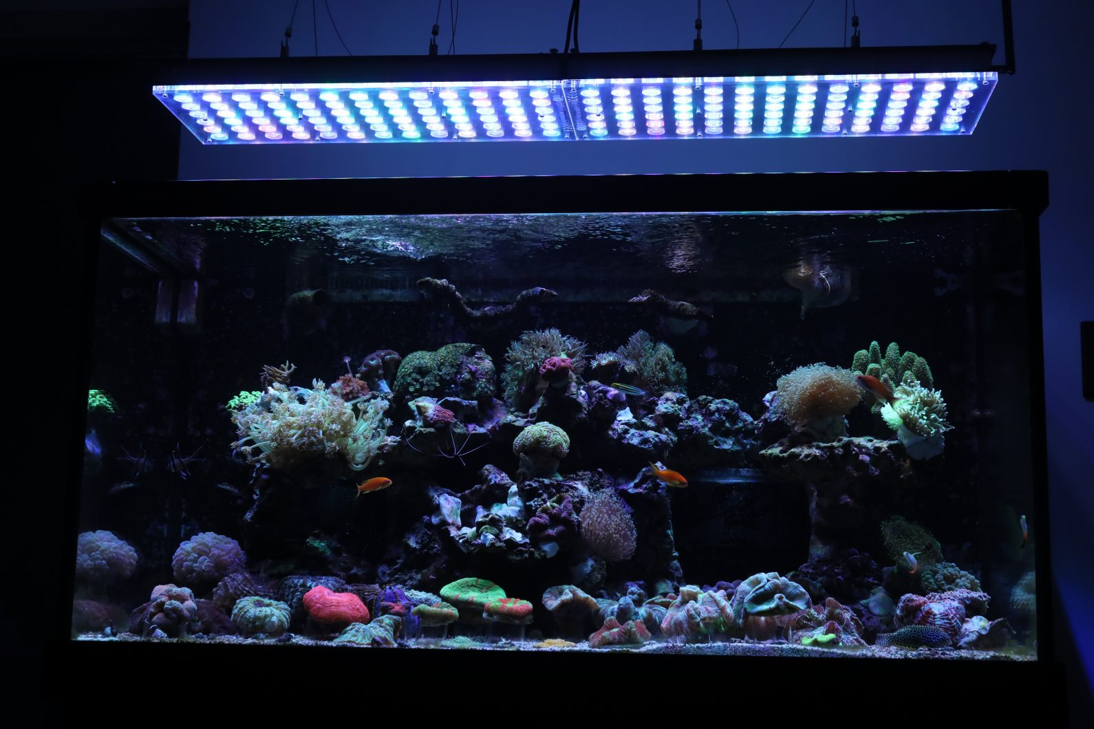 Orphek_Reef_Aquarium_LED_Light_Atlantik_v4_best_LED_Aquarium_lighting22