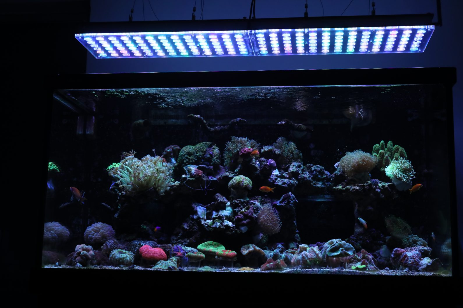 Orphek_Reef_Aquarium_LED_Light_Atlantik_v4_best_LED_Aquarium_lighting23