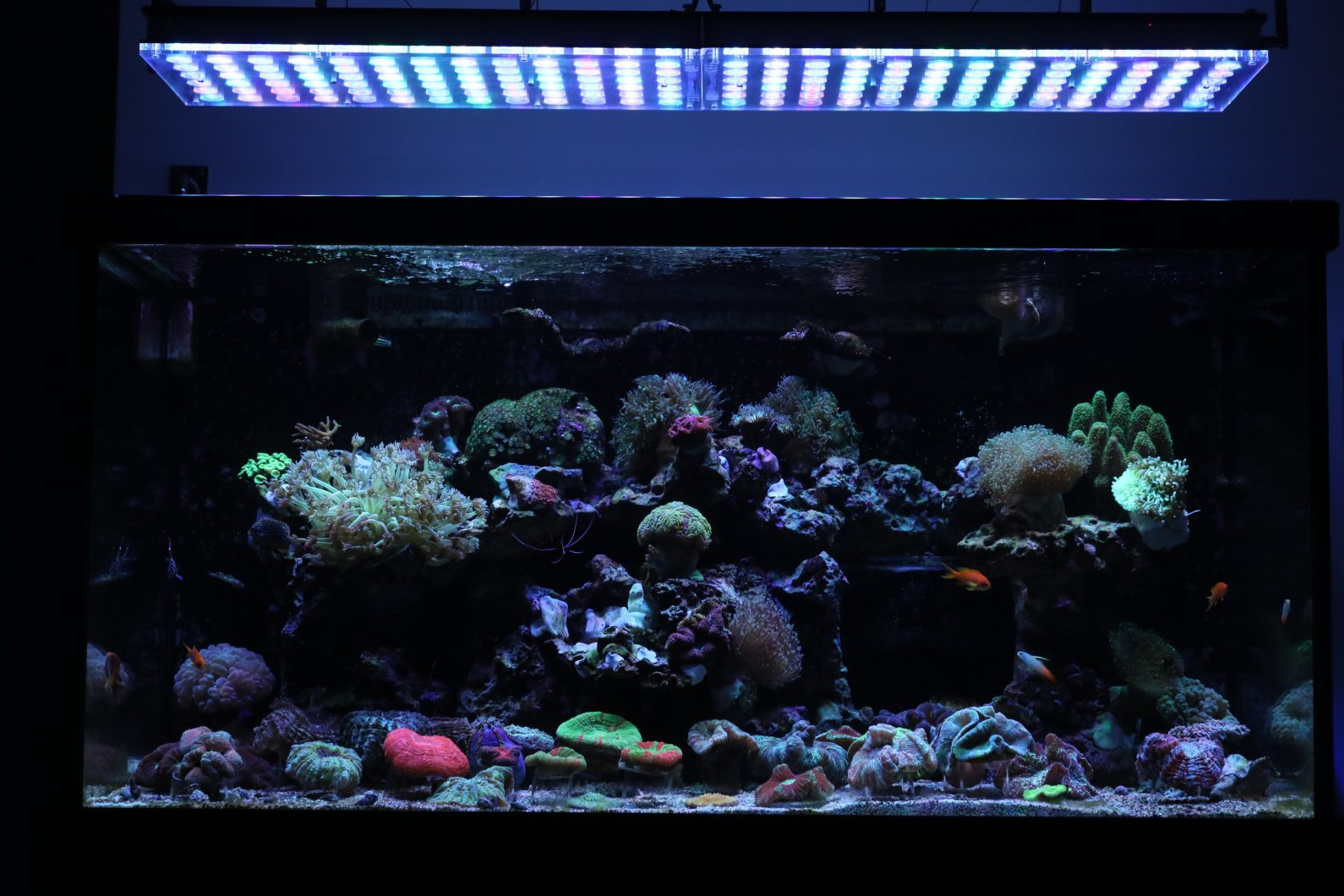 Orphek_Reef_Aquarium_LED_Light_Atlantik_v4_best_LED_Aquarium_lighting25