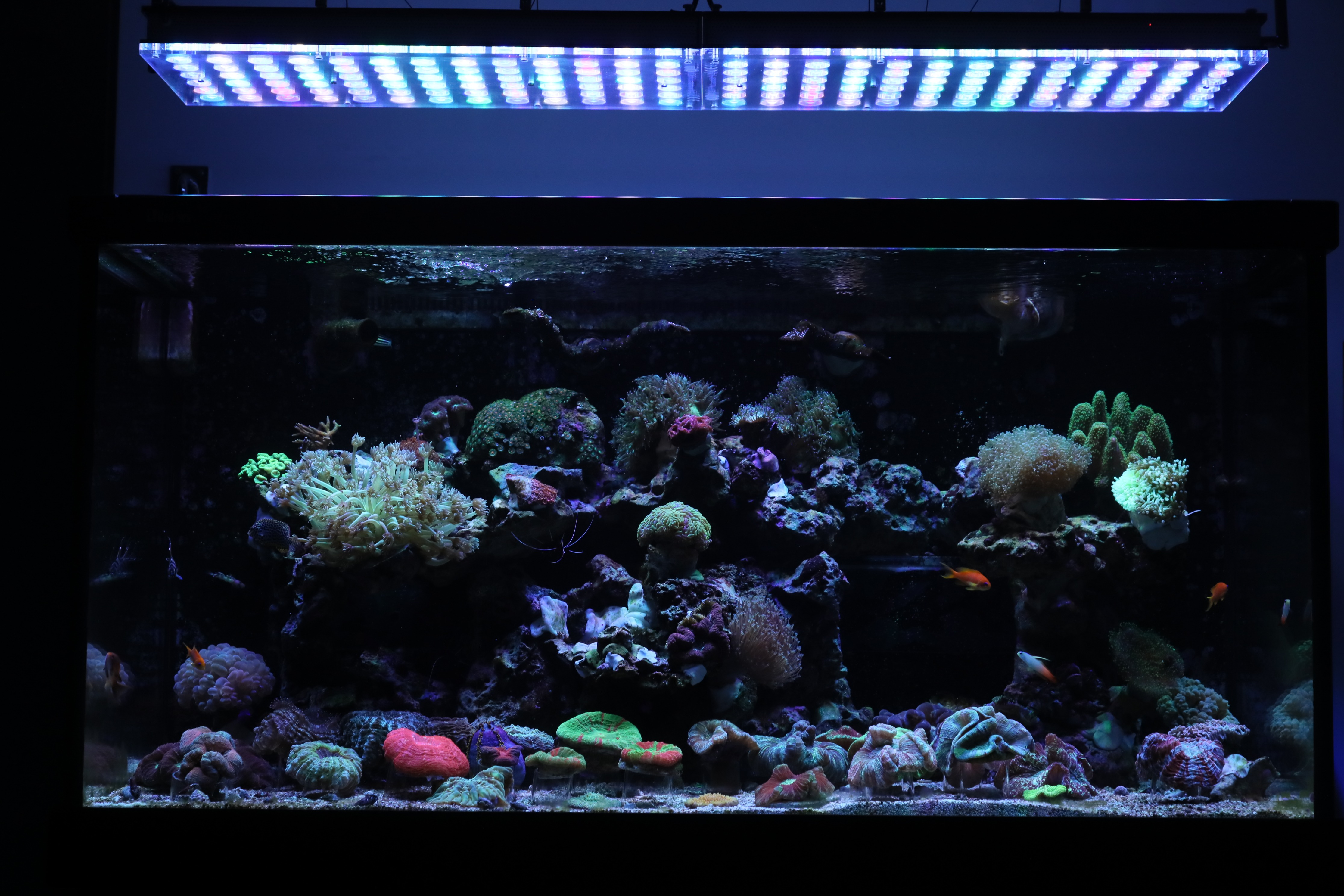 Aquarium led beleuchtung orphek aquarium orphek led for Aquarium beleuchtung