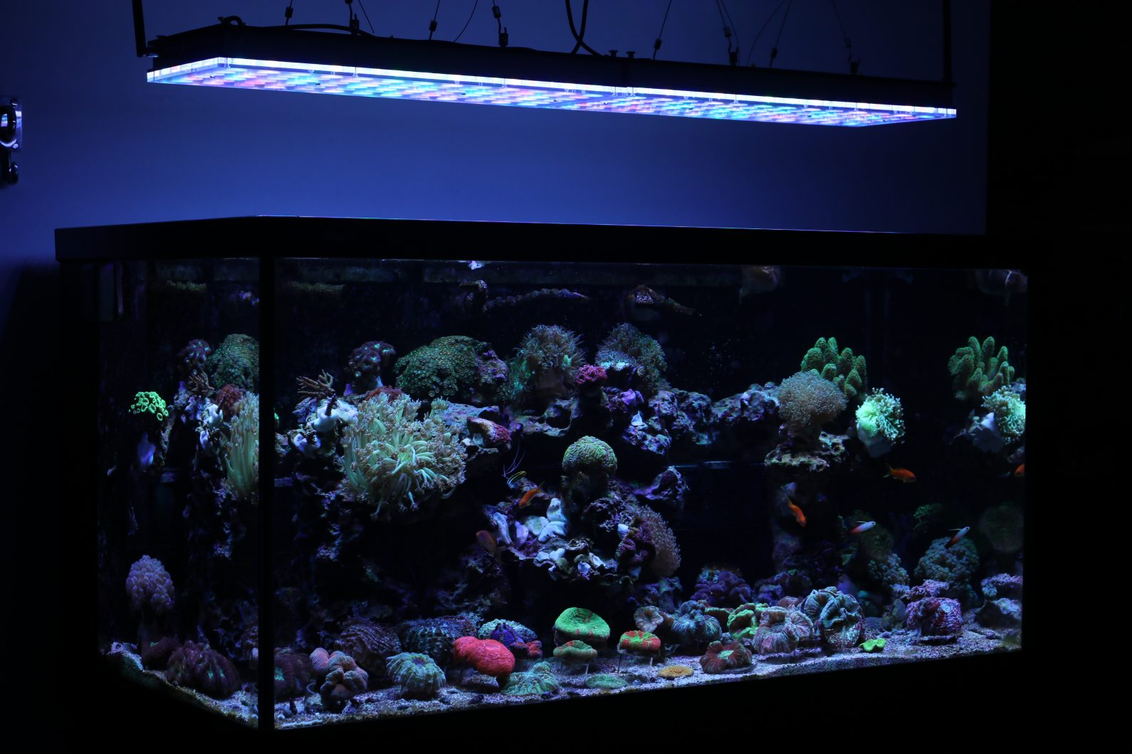Beautiful Brazilian Tank With Atlantik V4 Reef Aquarium