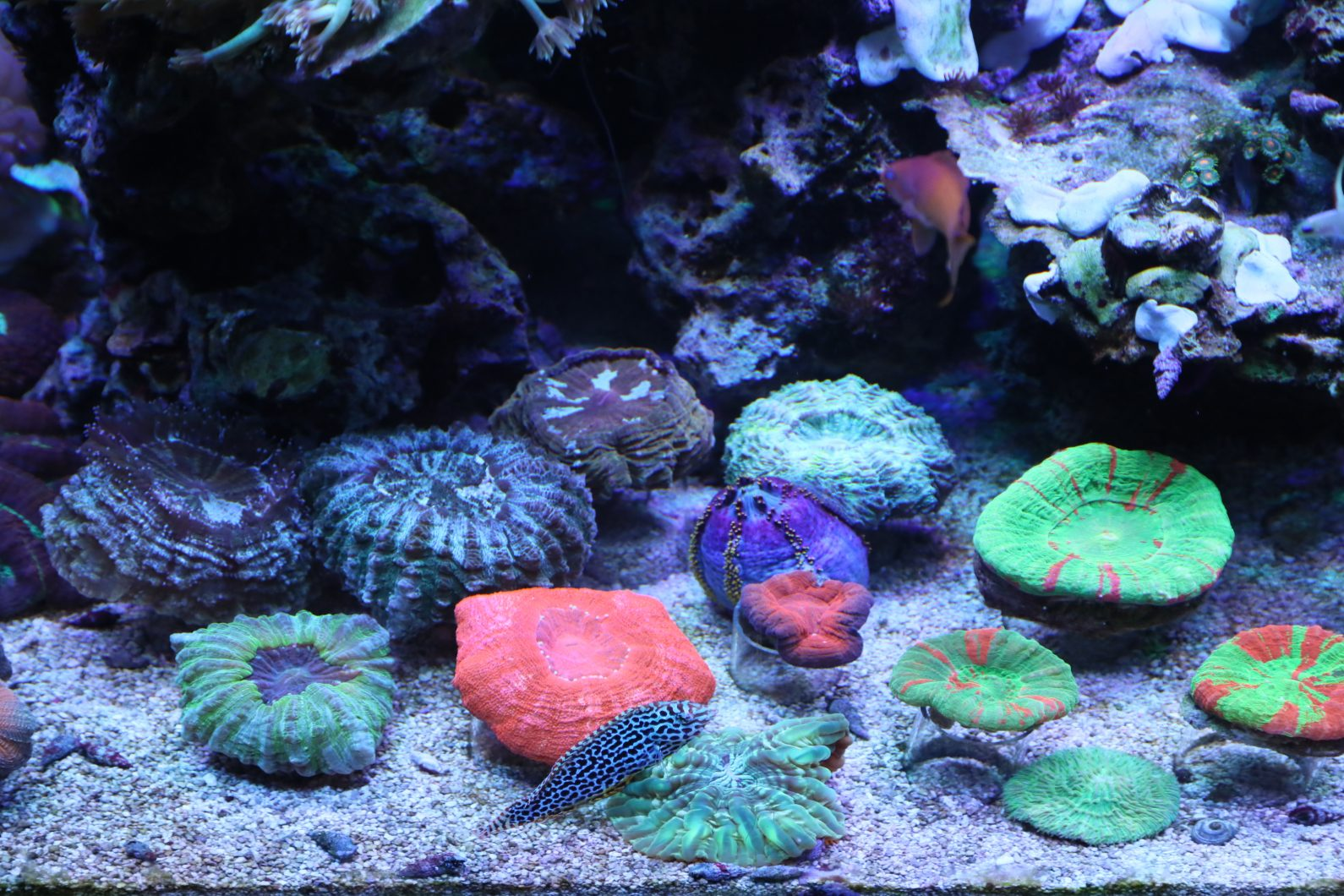 open_brain_coral_colaction_quarium
