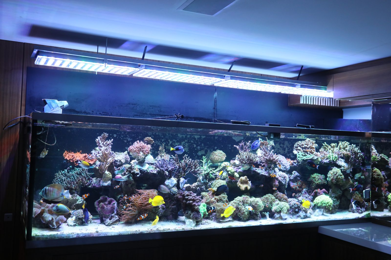 beautiful brazilian tank with atlantik v4 aquarium led lighting orphek. Black Bedroom Furniture Sets. Home Design Ideas
