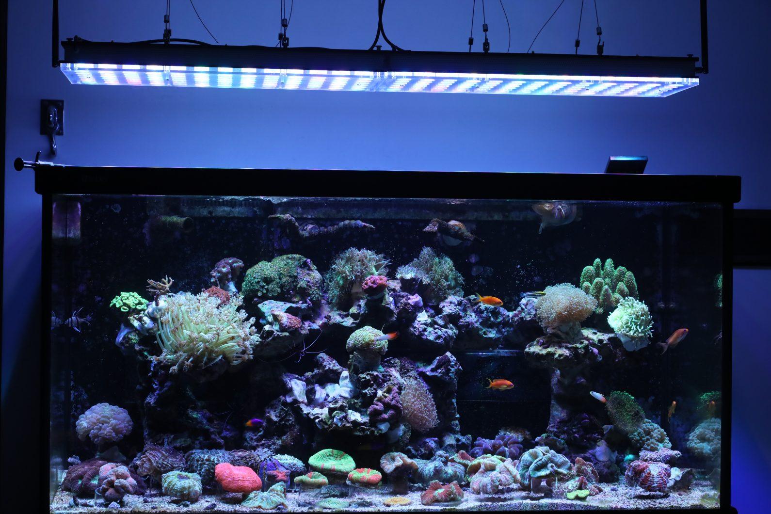 Orphek שונית אקווריום אור LED אטלנטיק v4 LED הכי אקווריום תאורה