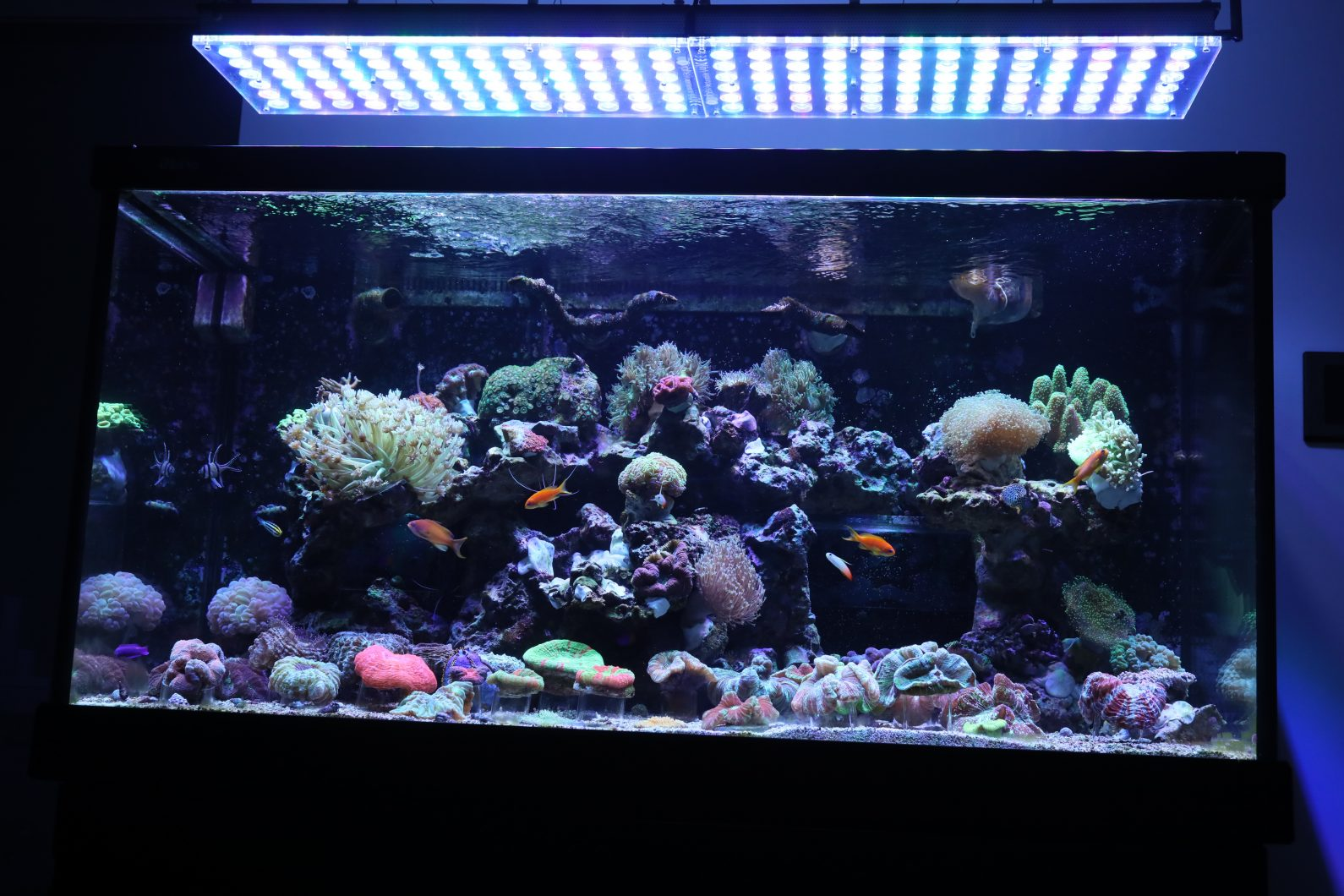 اٹلانٹک_v4_reef_led_light