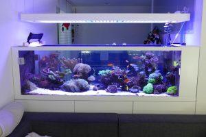 aquarium led beleuchtung orphek. Black Bedroom Furniture Sets. Home Design Ideas