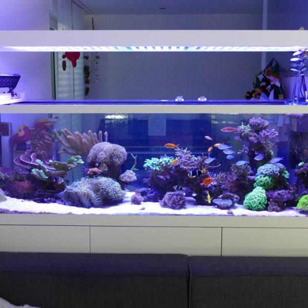 840 Liter Reef Aquarium From Switzerland