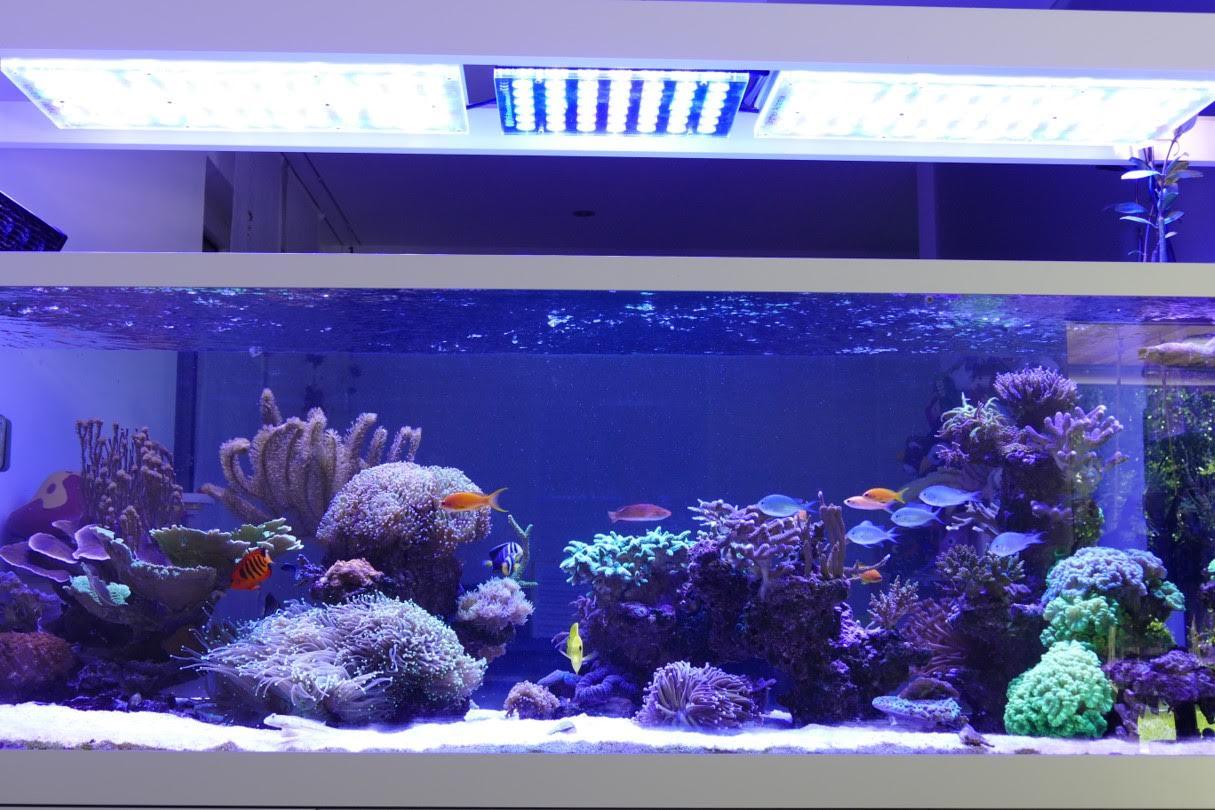 840 liter reef aquarium aus der schweiz aquarium led beleuchtung orphek. Black Bedroom Furniture Sets. Home Design Ideas