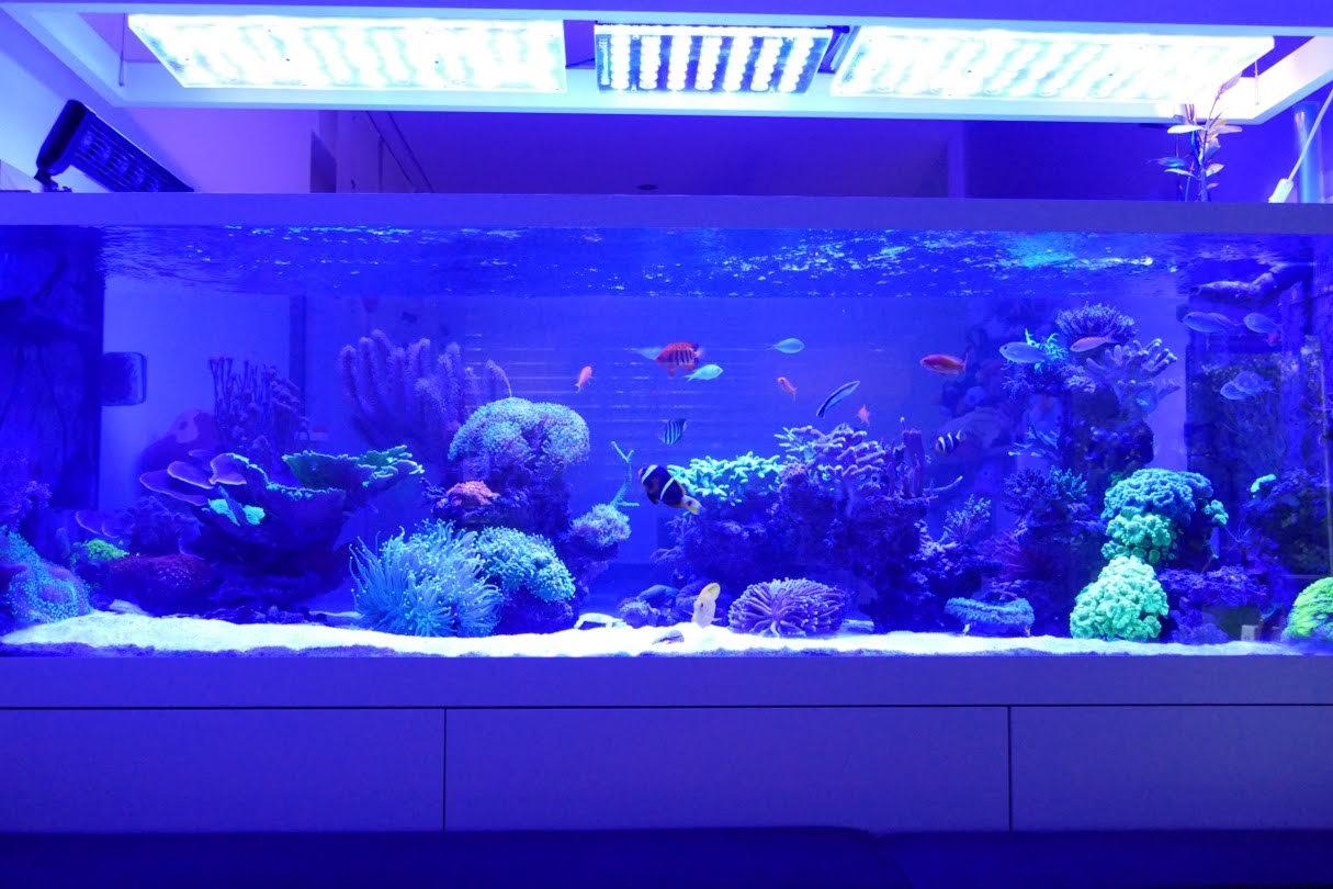 reef_aquarium