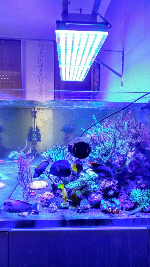 Aquarium-LED-lighting-Atlantik