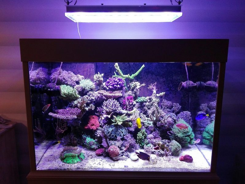 Aquarium LED-lighting00006
