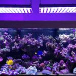 Aquarium LED-lighting00011