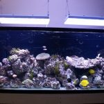 Aquarium LED-lighting00015
