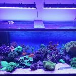 Aquarium LED-lighting00016