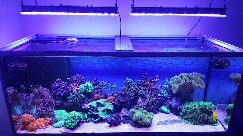 Aquarium-LED-iluminación00016