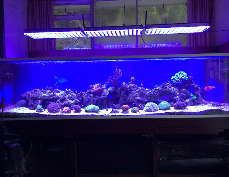 Aquarium LED-lighting00017