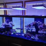 Aquarium LED-lighting00018