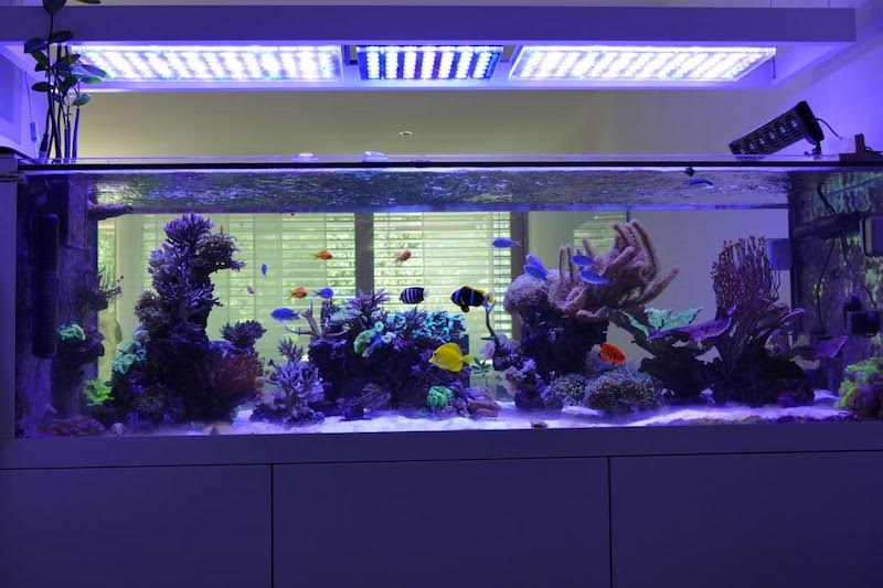 Aquarium LED-lighting00019
