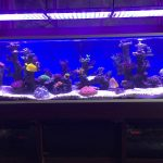 Aquarium LED-lighting00020