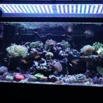 Aquarium LED-lighting00026
