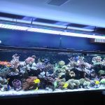 Aquarium-LED-lighting00027