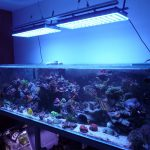 Aquarium LED-lighting00032