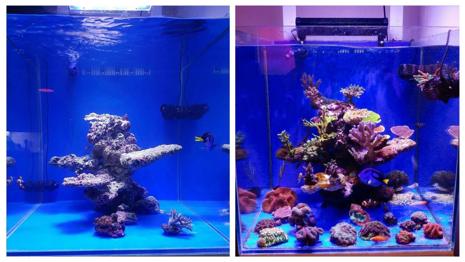 korallenfarbe wachstum unter atlantik compact aquarium led beleuchtung orphek. Black Bedroom Furniture Sets. Home Design Ideas