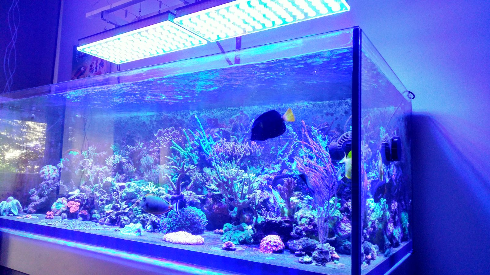 Best-2017-Aquarium-LED-свет-Orphek
