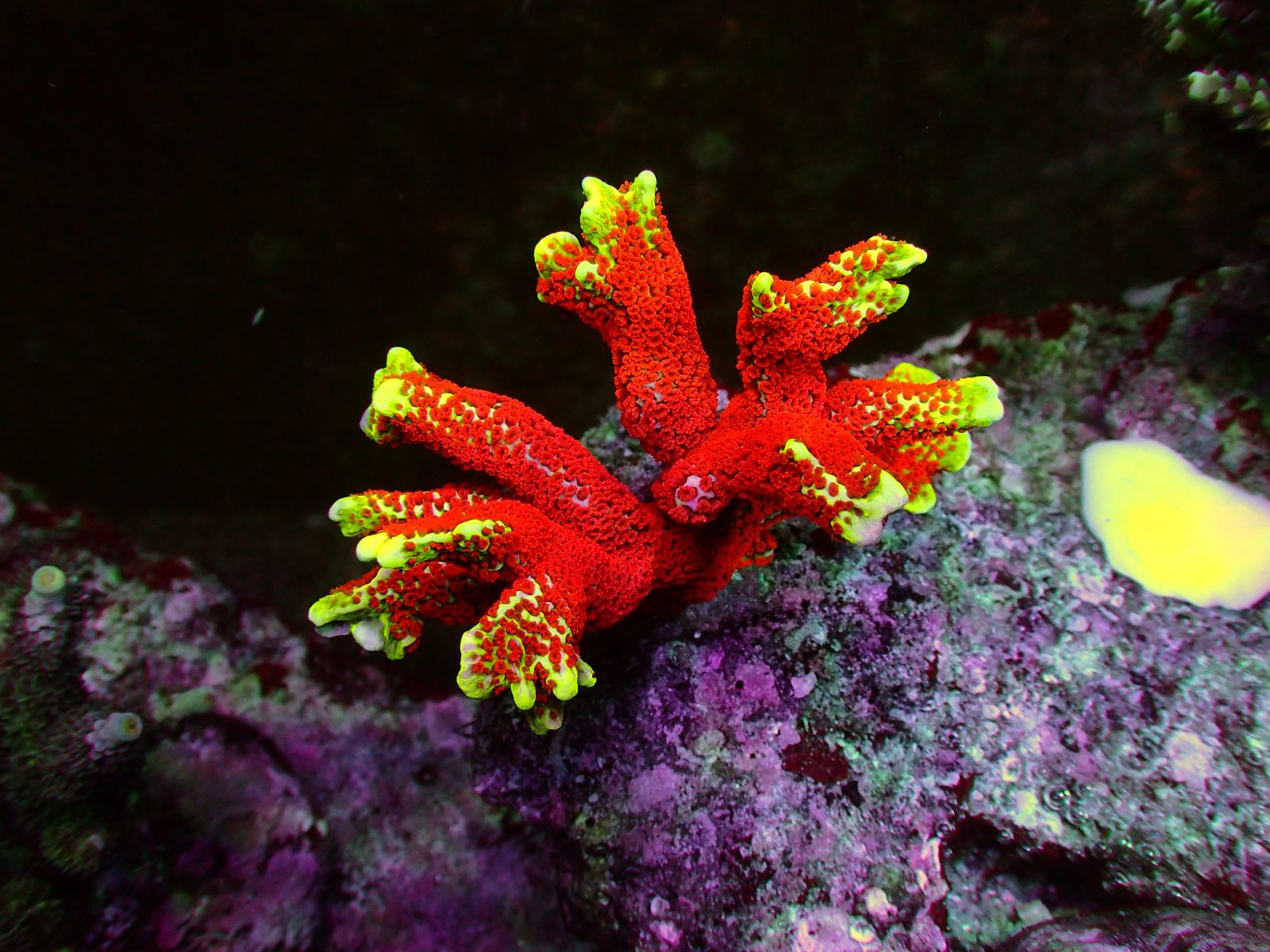 best aquarium LED lighting for corals