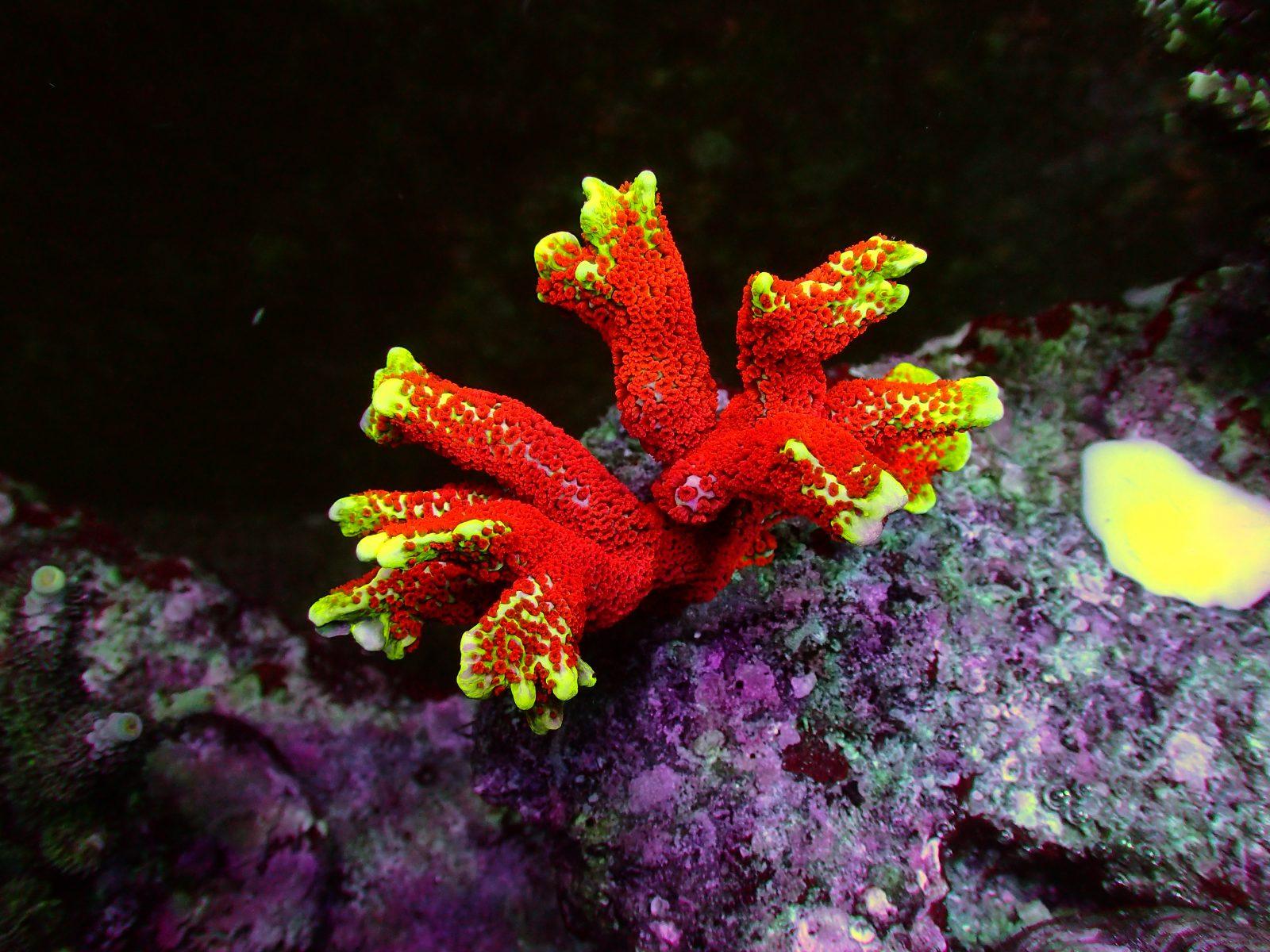 akuarium terbaik pencahayaan LED untuk karang