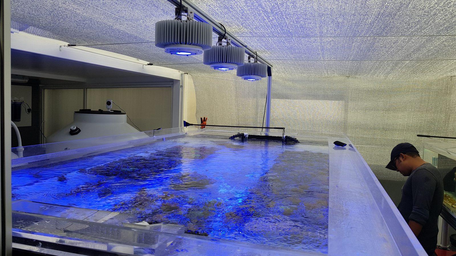 Kaspian-koralli-farm-LED-akvaario-valo