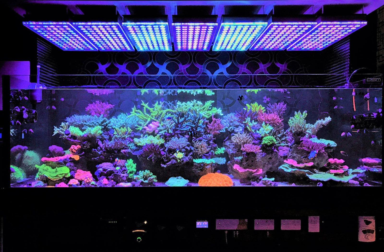 coral gallery under reef aquarium led orphek aquarium. Black Bedroom Furniture Sets. Home Design Ideas