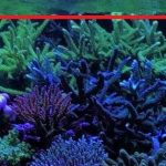 LED-acquario-Lighting-Orphek00063