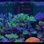 Удивительно рифов бак