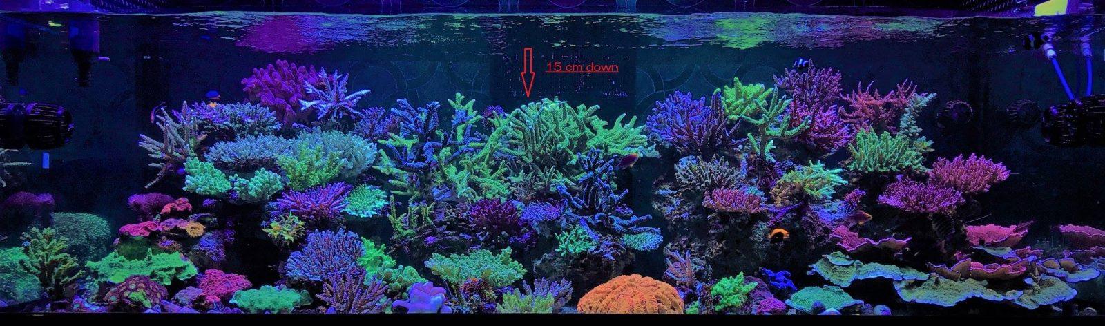 incroyable-récif-réservoir