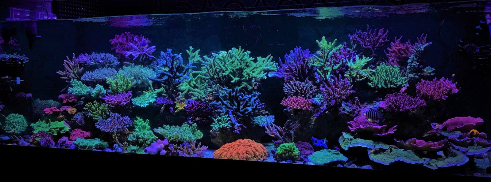 saltwater aquarium aquascape designs
