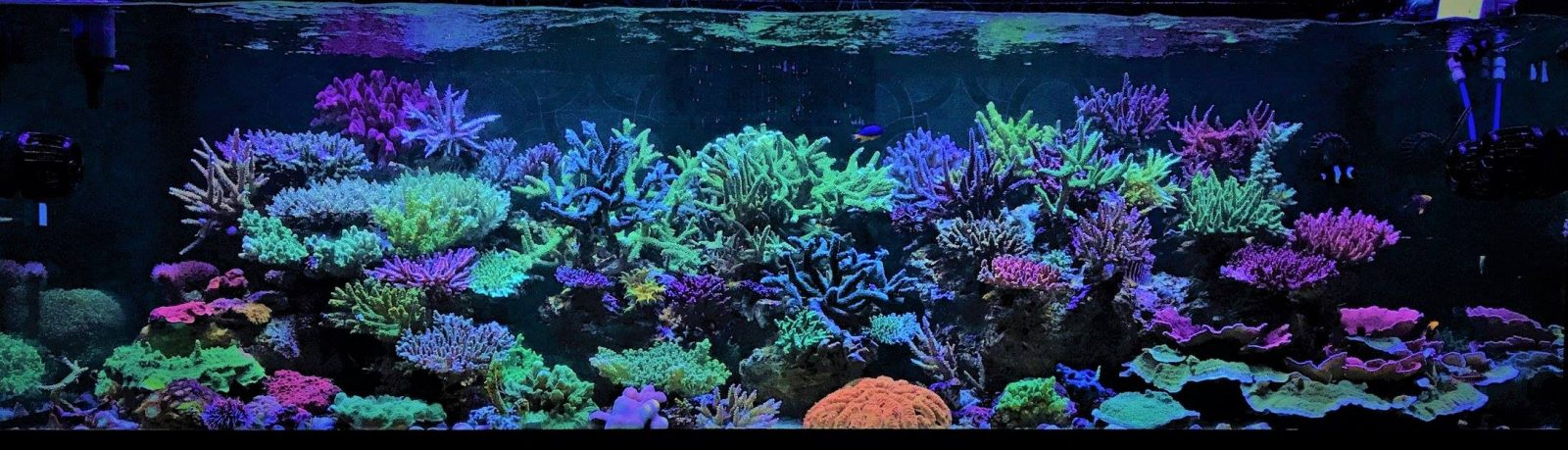 amazing reef aquascapes