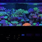 reef aquascape stilar