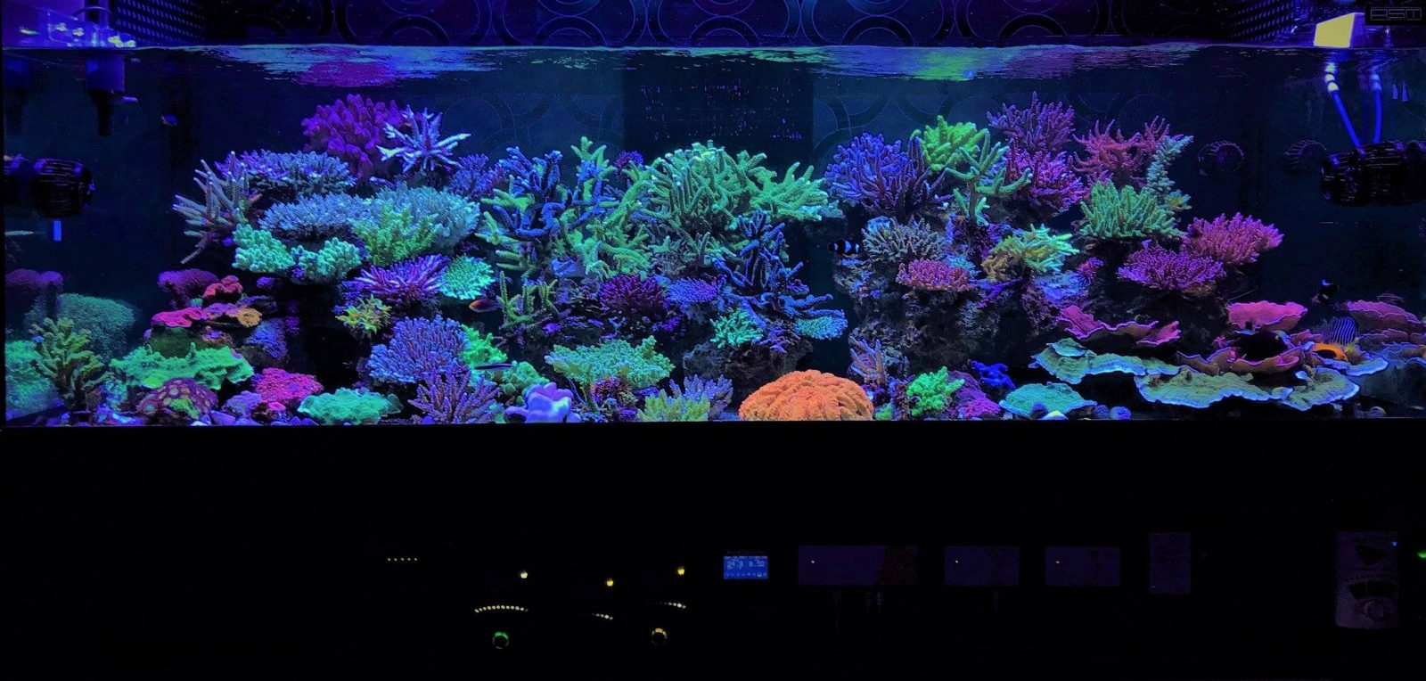 reef aquascape styles
