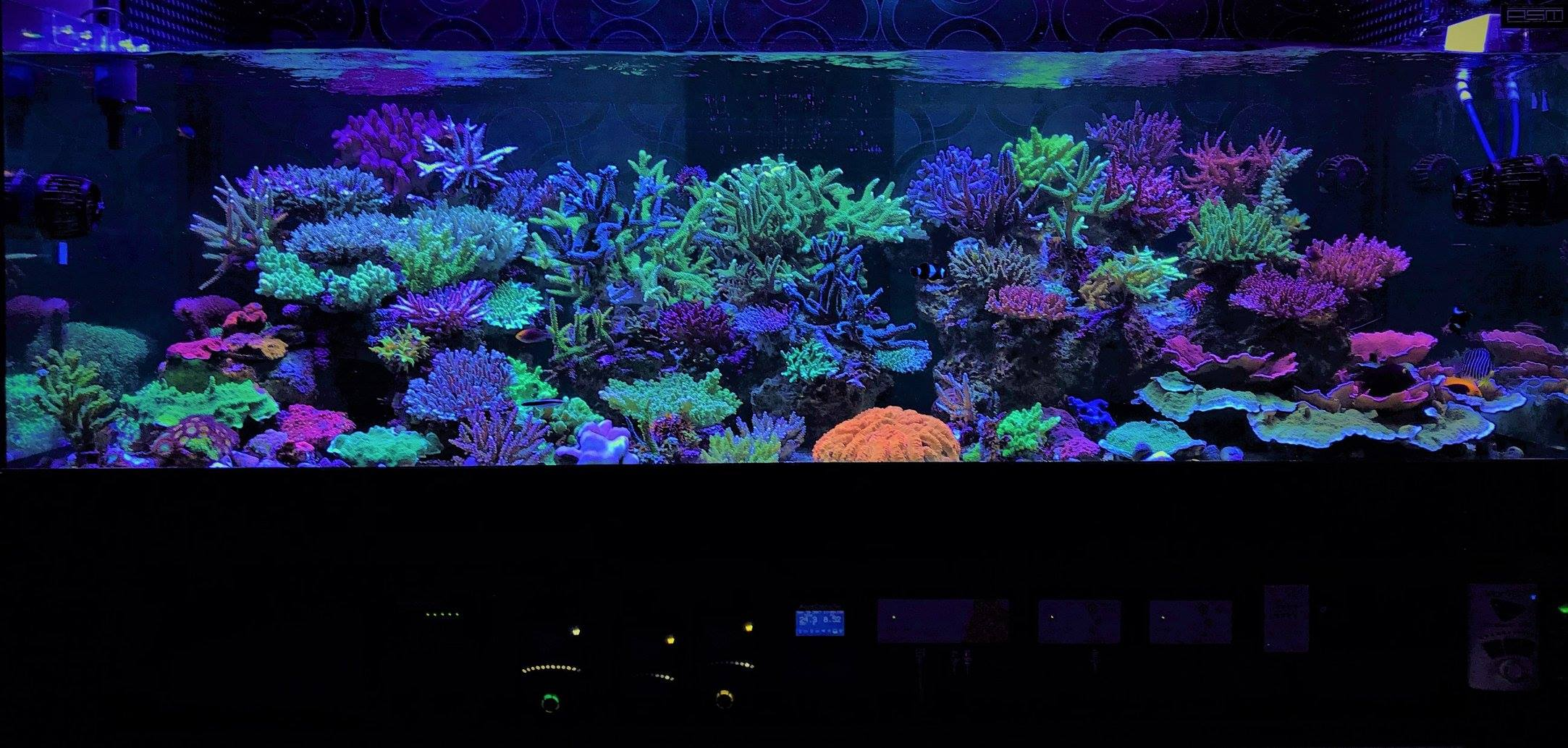 coral gallery unter riff aquarium led orphek aquarium led beleuchtung. Black Bedroom Furniture Sets. Home Design Ideas