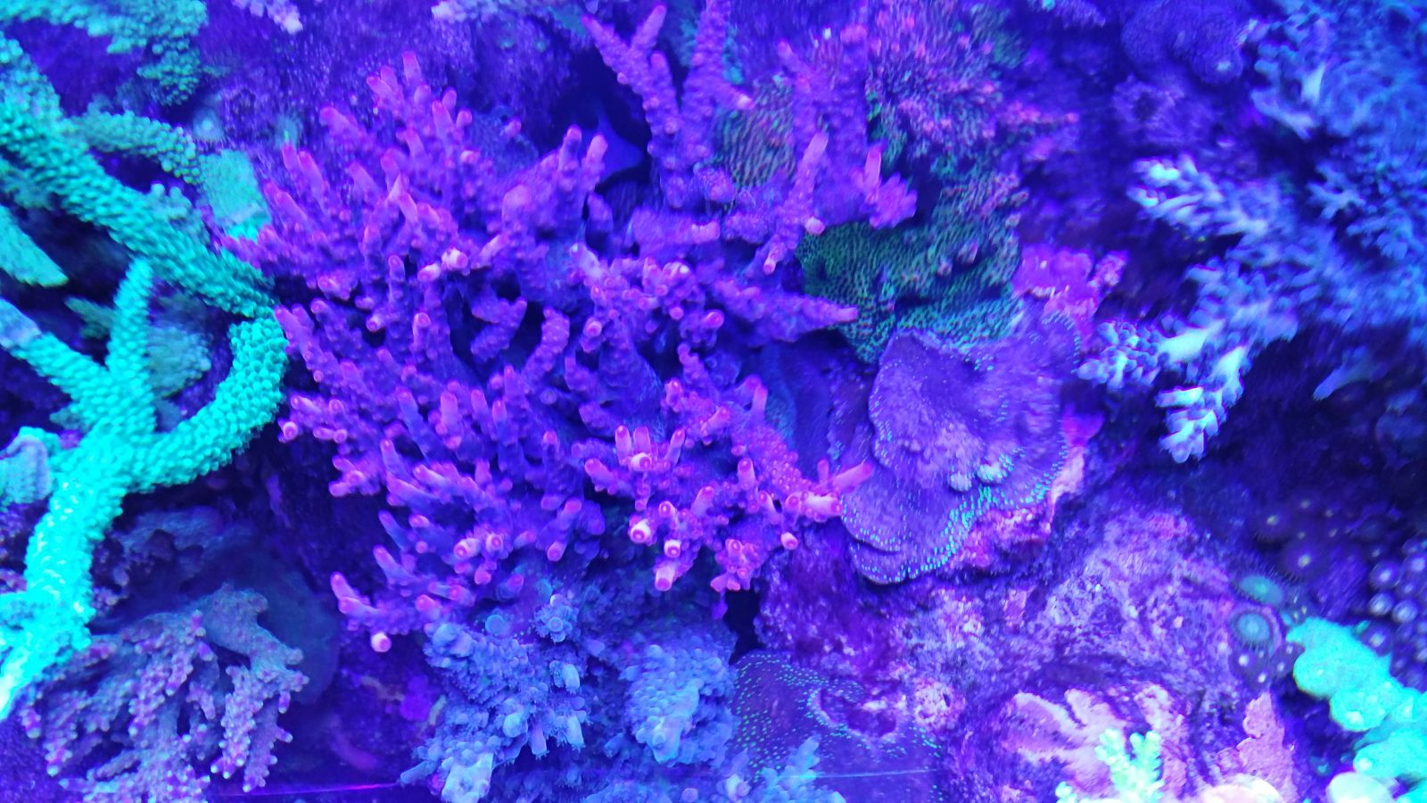 Reef-aquarium-LED-light