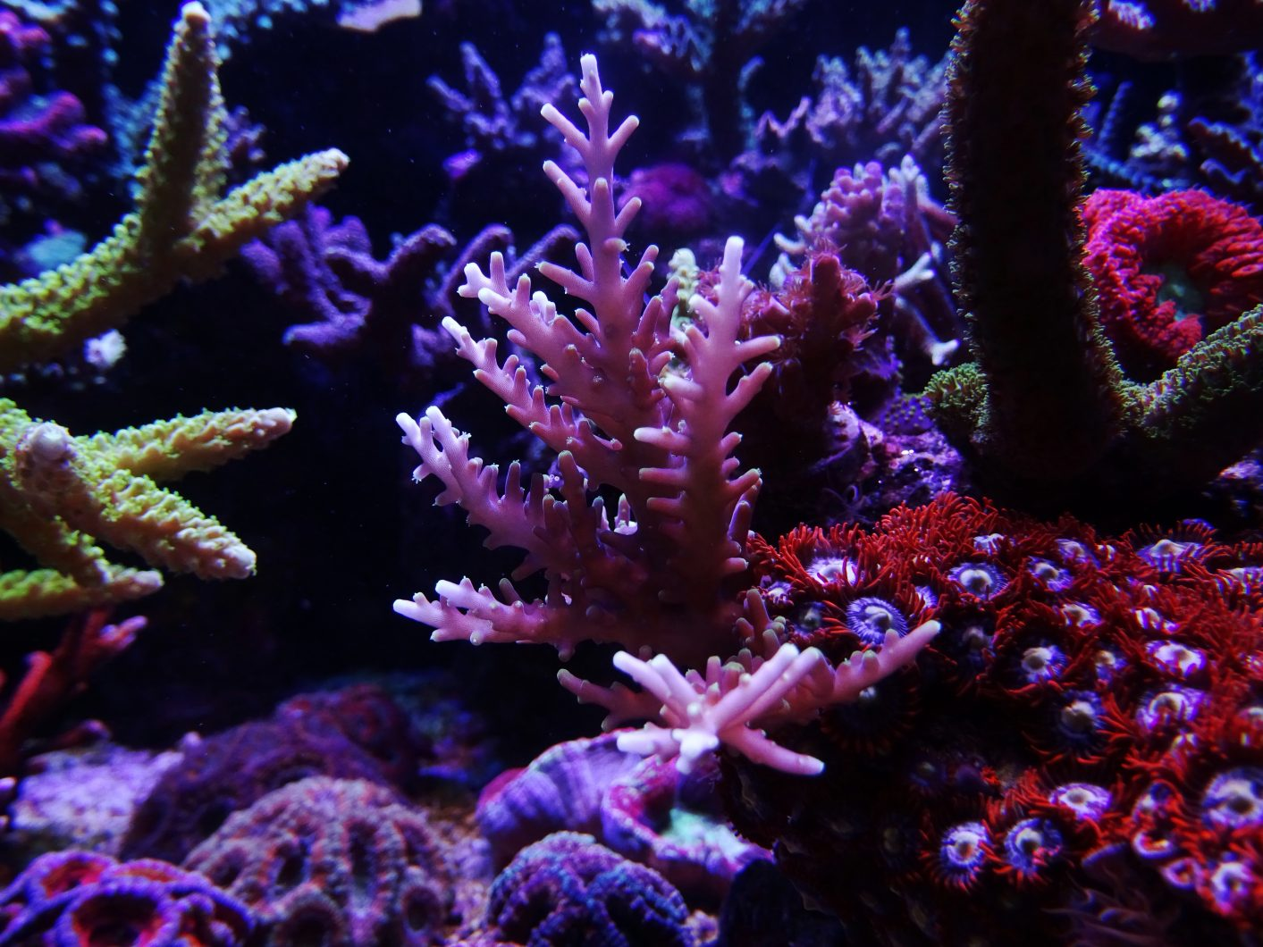 incroyable-corail-aquarium