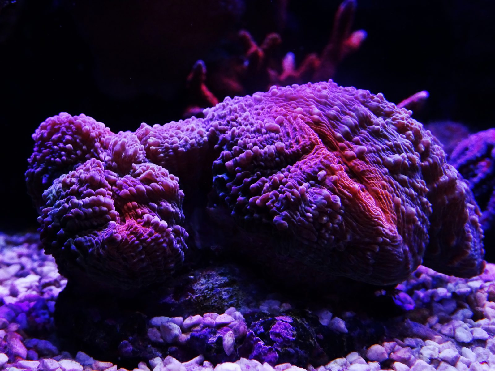 amazing-coral-aquarium-LED-Light