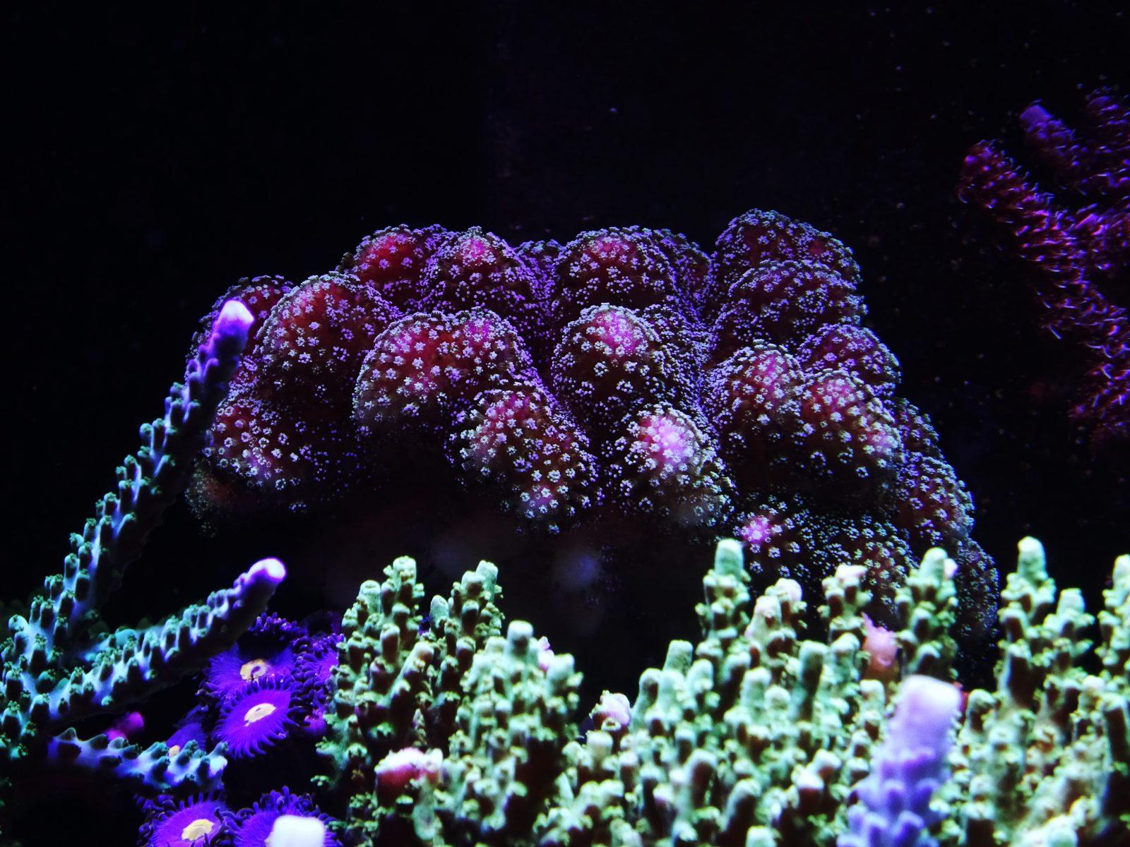 驚人-SPS-水族館