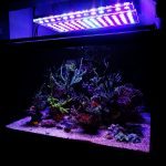 bel-aquarium-led-éclairage