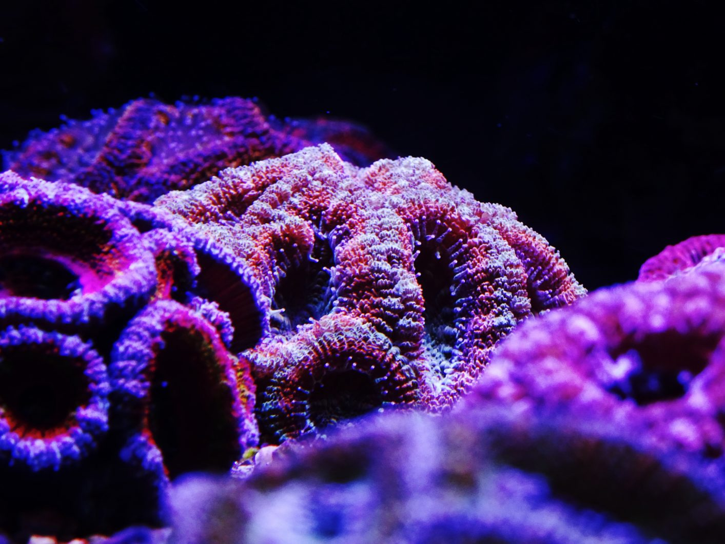 beautiful-reef coral-tank