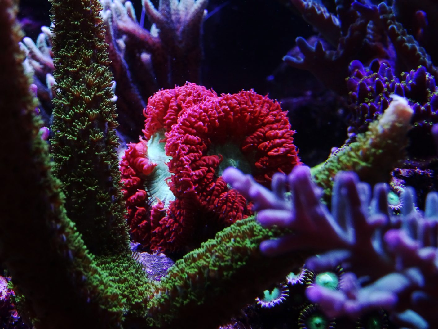 paling apik-foto-coral-aquarium-LED-Light