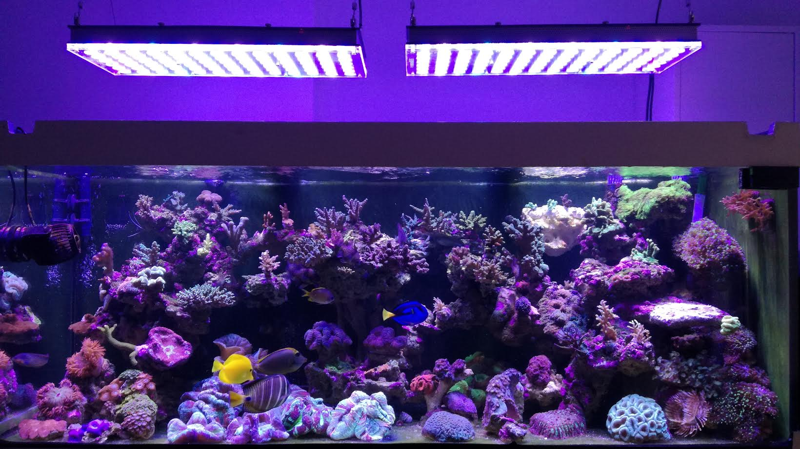 Aquarium-LED-đèn