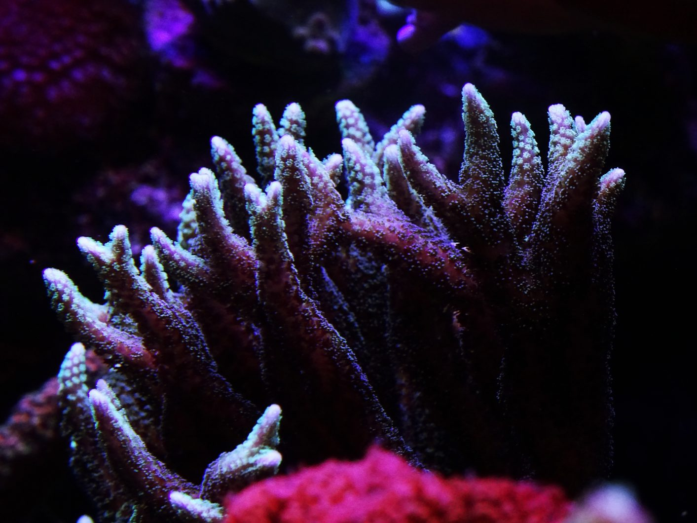 corail-aquarium-LED-lumières