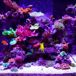 Best-LED-Aquarium-lighting-Orphek